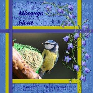 1.  Mésange bleue