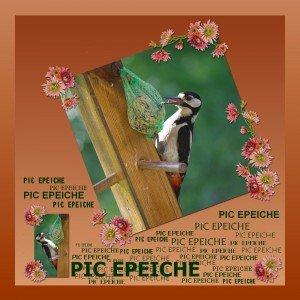 Joli Pic Epéiche: le retour! dans Animaux pic-300x300