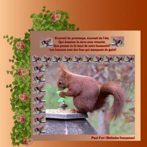 Ca ne lui coupe pas l'appétit! dans Animaux ecureuil-paul-fort1-300x300