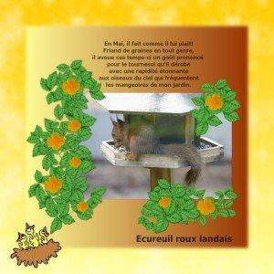 ecureuil-roux-zoziaux1-300x300 dans En bref