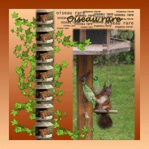 Fin d'été dans En bref oiseau-rare21-300x300