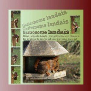 gastronome-landais1-300x300