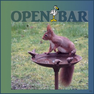 15. Open Bar
