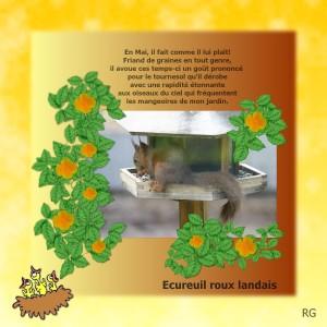 6. Ecureuil roux zoziaux
