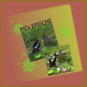 Pic Epeiche 4