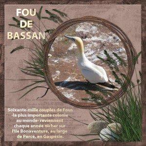 15. Un Fou de Bassan