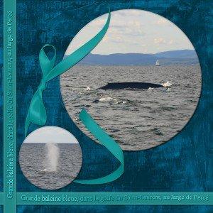 16. Grande baleine bleue