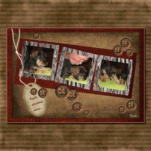 10. Papili, éducateur canin