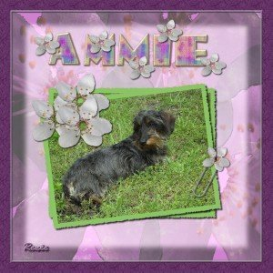 5. Ammie