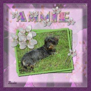 5. Ammie
